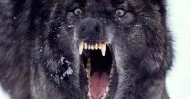 DogsAsDeathMetal