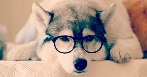 DogsAsProgressiveMetal