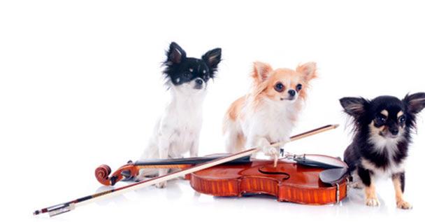 DogsAsSymphonicMetal
